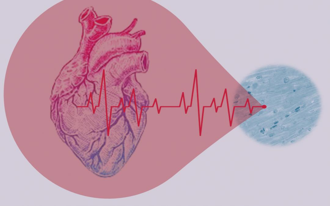 Μεταβολική Καρδιολογία: από την θεραπεία της καρδιάς στην θεραπεία του μυοκαρδιακού κυττάρου